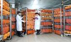Производство колбасы: сертификация, технологический процесс и оборудование