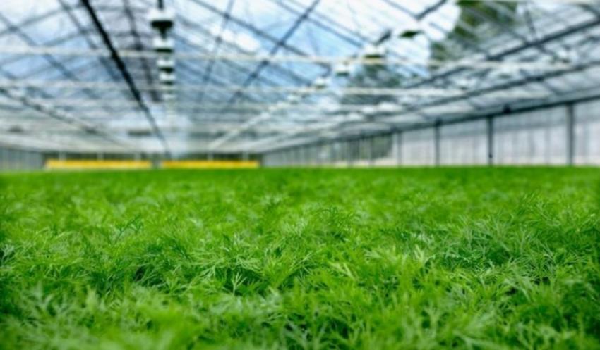 Открытие бизнеса на выращивании зелени