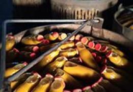 Ботлихский фруктово-консервный завод