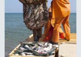 Камчатская рыба