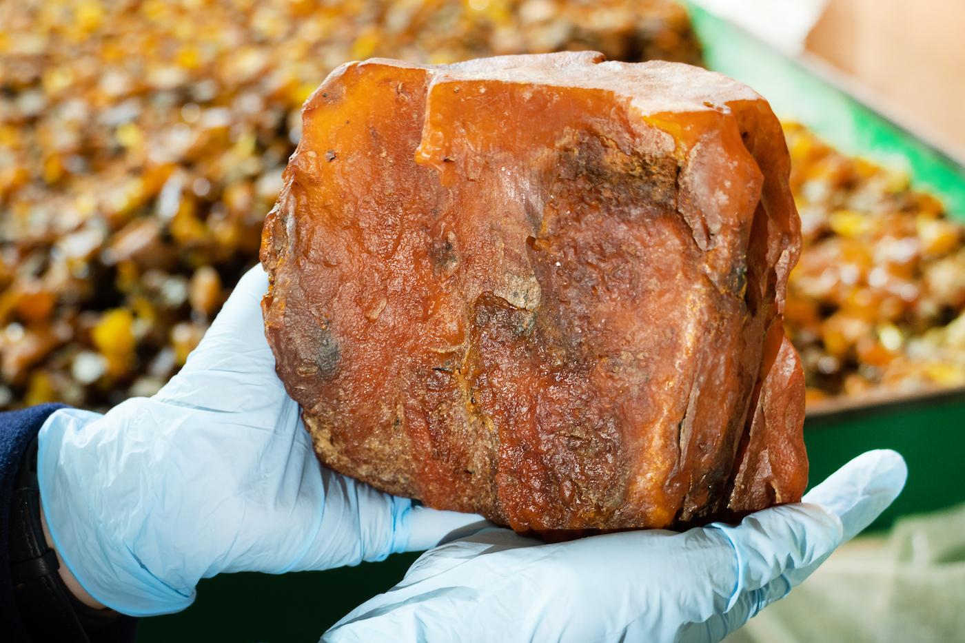 За август уже третий самородок весом более 1 кг: калининградский янтарный комбинат добыл камень-гигант